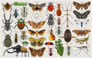 entomology_mumbo_jumbo_by_killskerry-d4cg7a2
