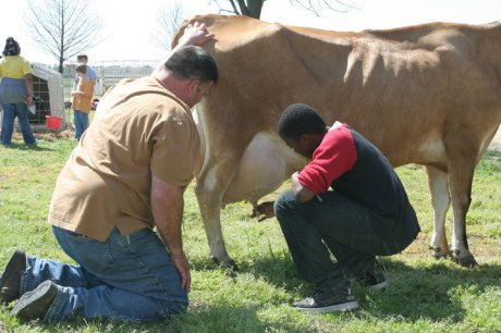 Learning to milk a cow