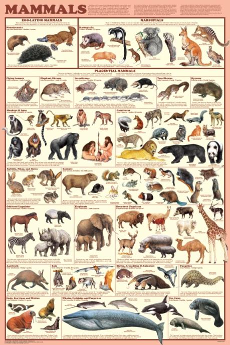 gs430-mammals_poster